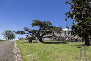 Huge trees and country house Bingie (near Morua) . NSW. Australia