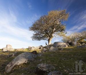 Landscape with tree on rocky hill. Bingie. Nsw. Australia.