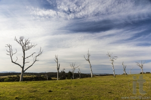 Typical countryside landscape with dead trees. Bingie. Nsw. Australia