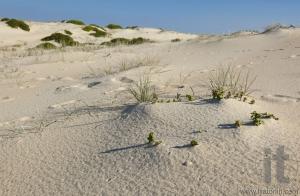 Sand dunes landscape. Fingal Bay. Port Stephens. Australia