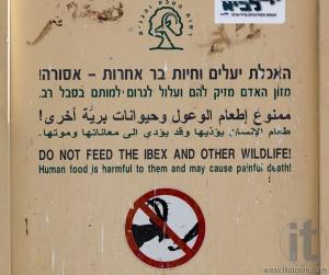 Do not feed ibex. Makhtesh Ramon. Israel