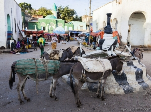Donkeys wait to be loaded on market square of walled city of Jugol.  Ethiopian donkey population is biggest in Africa and also the second largest in the world after China. Harar. Ethiopia.