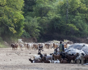 Hamar shepherds with their herd in a dry river bed.
