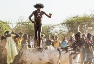 Young man jumps of the bulls.
